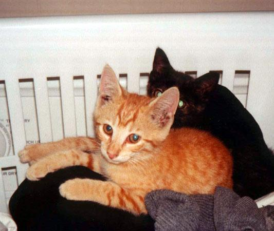Kittens In Laundry